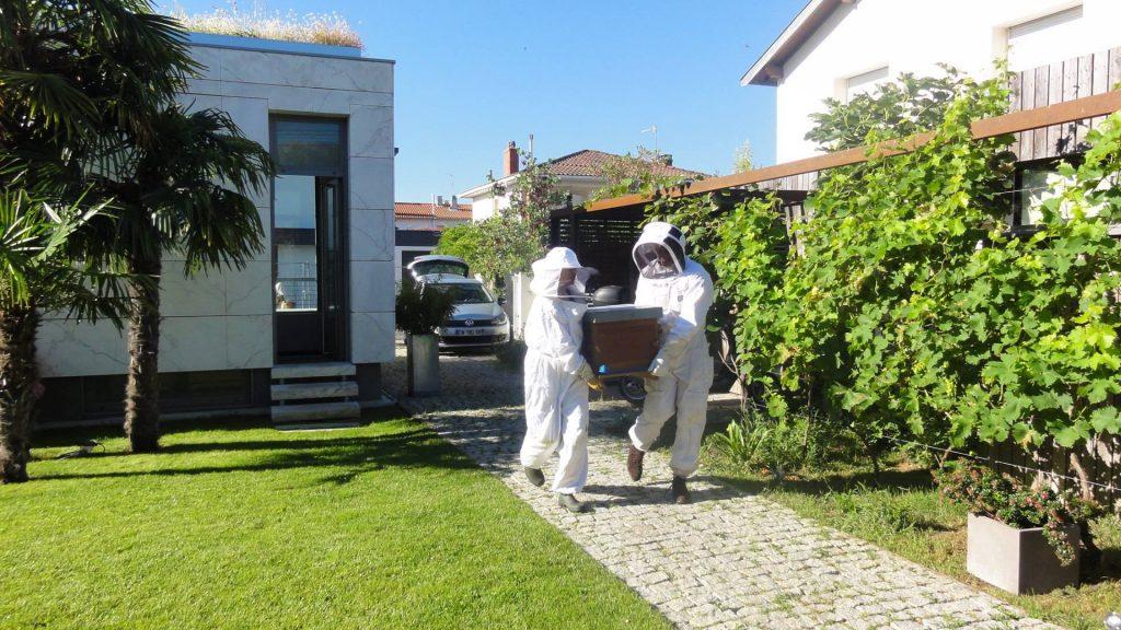 Les abeilles de Biocenys arrivent chez Seuil architecture